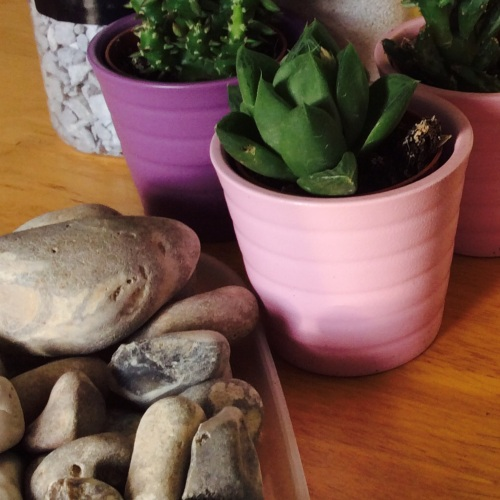 succulents #acraftyginger